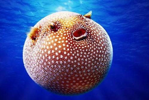 地球上那些形状奇特的动物【3】--江西频道--网