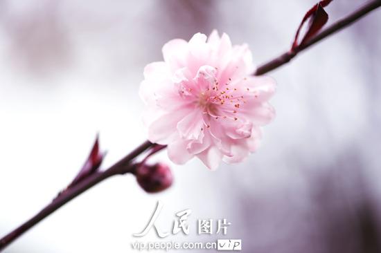 赏花踏青正当时 盘点国内八大迷人 桃花园 图