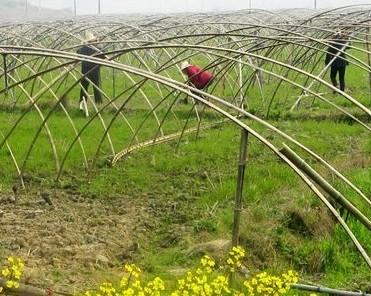 新余高岚乡大力推进农业产业结构调整