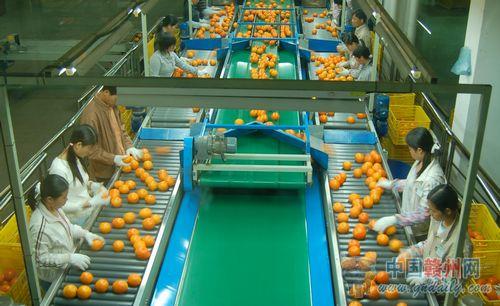 杨氏果业果品加工车间一角。(资料图片)