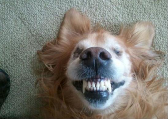 可是这组龇牙咧嘴的狗脸绝对是动物趣图界的奇葩