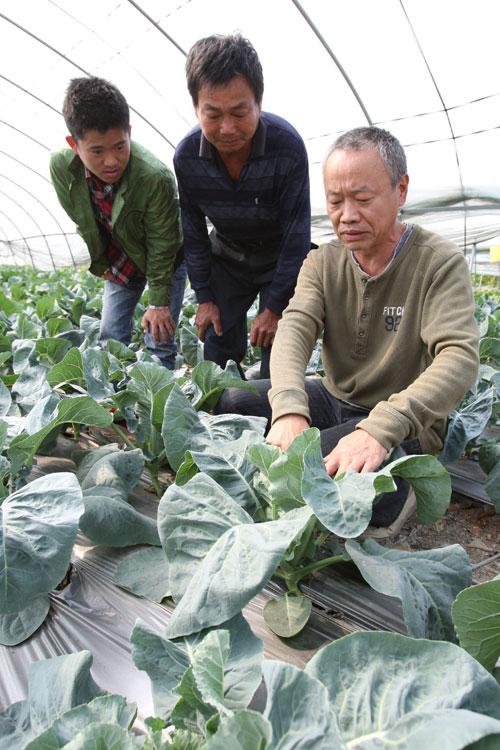 南昌市蔬菜局研究员闵跃中正在南昌县塔城乡