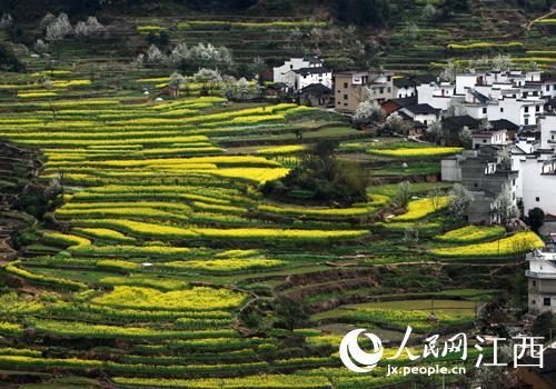 春紫阳.篁岭景区供图图片