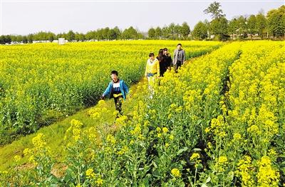 江西省农业种植结构