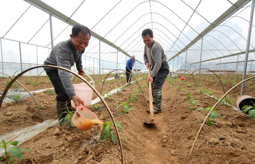广昌蔬菜产业扶贫