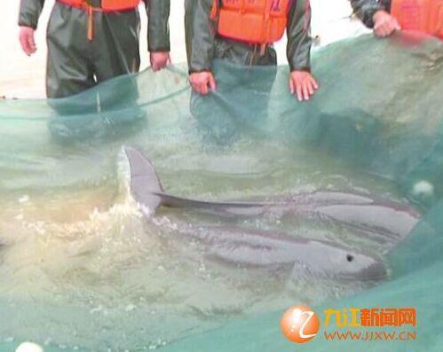 《捕捉国家二级及省重点保护水生野生动物的审批》