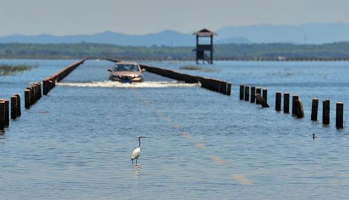 8月13日,汽车行驶在被淹的鄱阳湖国家级自然保护区核心湖大湖池公路上