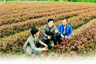 第一书记王宣富(左二)在苗木基地查看苗木生长情况