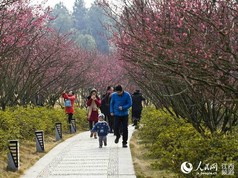 江西九江: 春节团圆游 美景聚乡情(图)