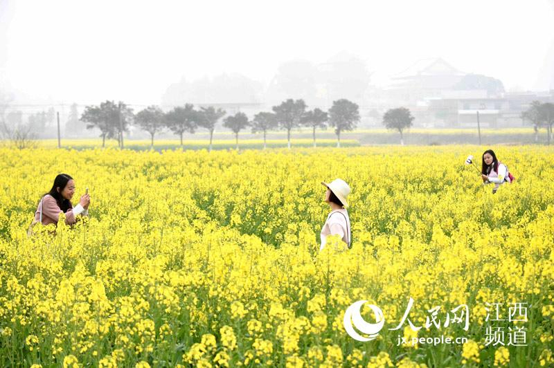 游客在安义县油菜花海里嬉戏玩耍,拍照留念.