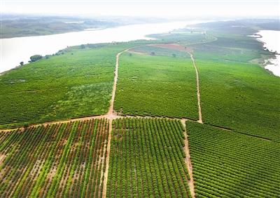 樟树市吴城乡大力发展道地药材种植