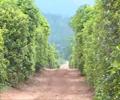 绿海茶油:31年匠心 成就一瓶好茶油        始建于1987年,地处风景如画的江南生态名县——江西省永丰县