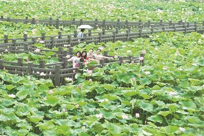 江西频道    6月7日,游人在新余市渝水区罗坊镇湖头村荷塘赏荷游玩.