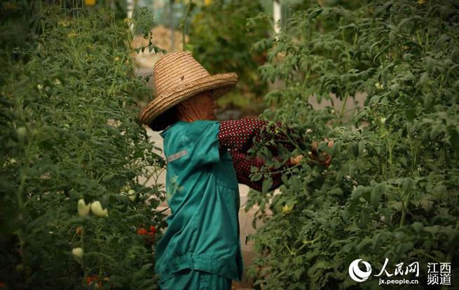 井冈山拿山镇:农旅融合 确保农民收入可持续