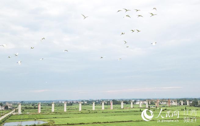 江西宜丰:蒙华铁路穿越生态和谐之美