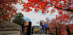 打卡京城赏红叶胜地 找寻藏在红叶里的诗意