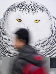 吉林举行国际冰雪摄影展