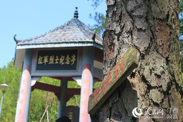 红军烈士纪念亭旁,十七棵青松挺拔,松树上挂着17位当年参军的华氏青年的姓名牌。艾鑫 摄