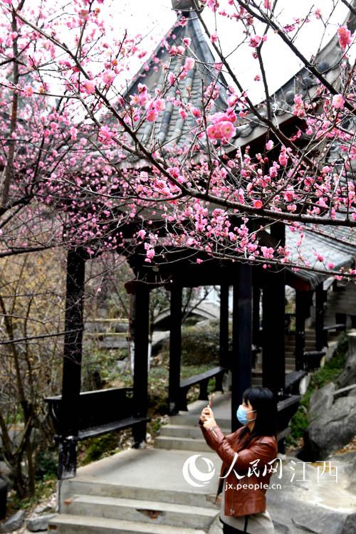 游客在太阳谷内赏花、拍照,感受春天的气息。(时雨/摄)